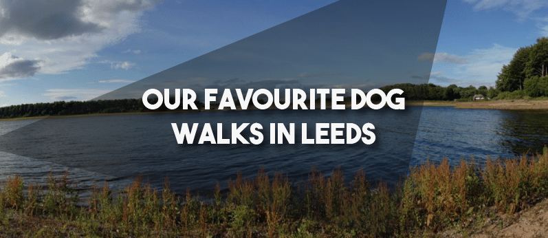 Our Favourite Dog Walks In Leeds